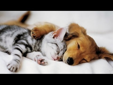 dogs-sleeping-with-cat