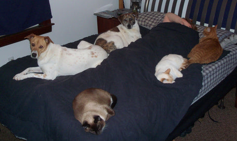 sleeping-with-cats-dogs