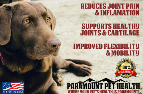 liquid glucosamine for dogs reduces joint pain
