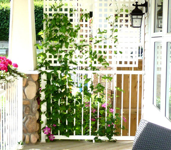 patio lattice with floor to roof clematis
