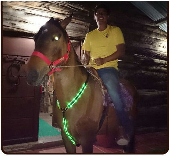 LED safety Light Horses Neck Belt