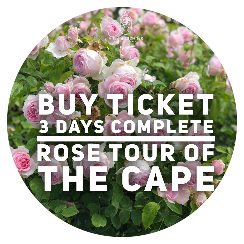 Day 1, 2 & 3 Tour Rose Gardens of the Cape of Good Hope, South Africa