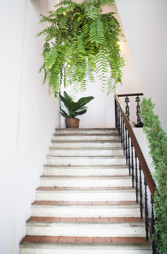 5 of the Best Indoor Plants for Your House