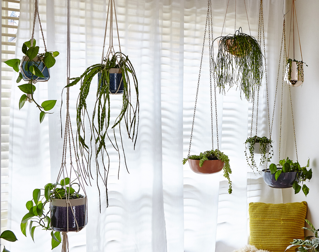 Setting Up Hanging Planters: 5 Things to Know