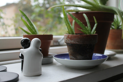 loe Vera as an indoor plant has enough health benefits to bring your salt and pepper together