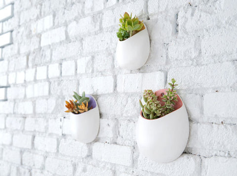 Wall Hanging Plants