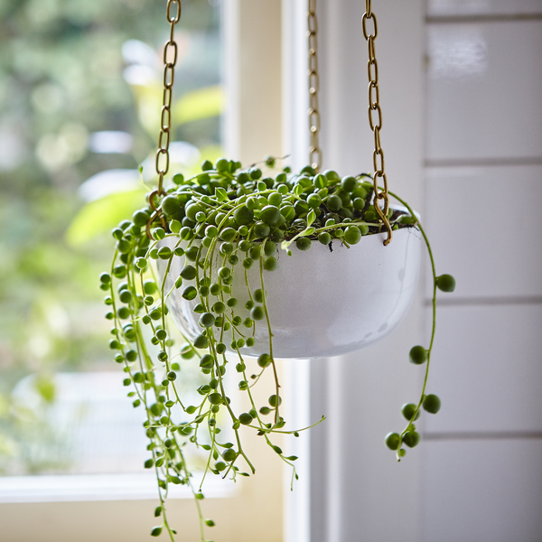 hanging planters ideas