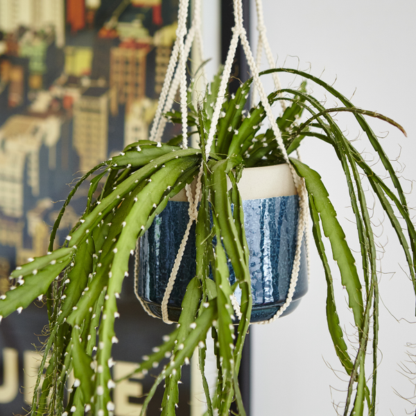 Indoor ceramic hanging planter