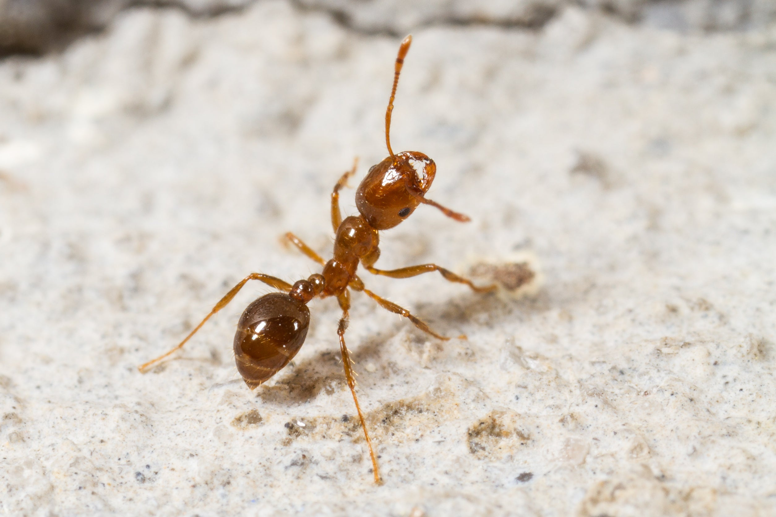 Ants BookLife