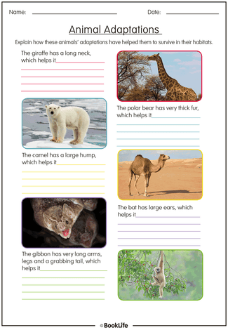 Animal Adaptations Activity Sheet