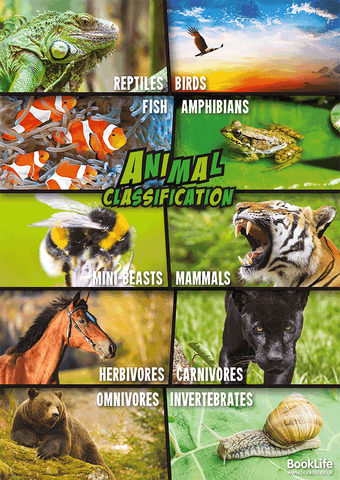 Free Animal Classification Poster