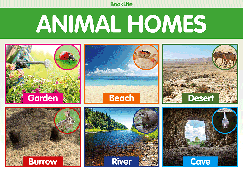 Animal Homes Poster by BookLife