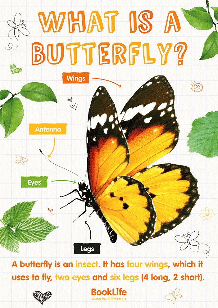 What is a Butterfly? Poster by BookLife