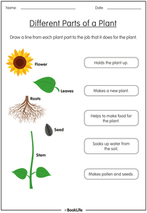 Different Parts of a Plant by BookLife