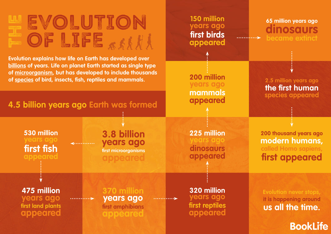 Free Evolution Poster by BookLife