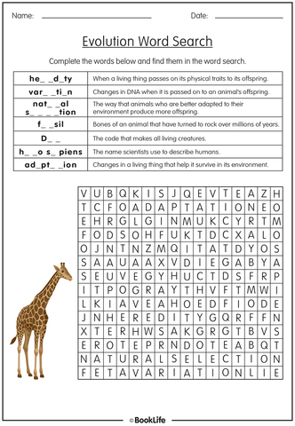 Evolution Activity Sheet