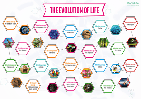 Evolution of Life Poster