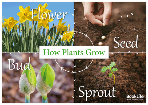 Growing Plants Poster