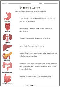 The Digestive System by BookLife