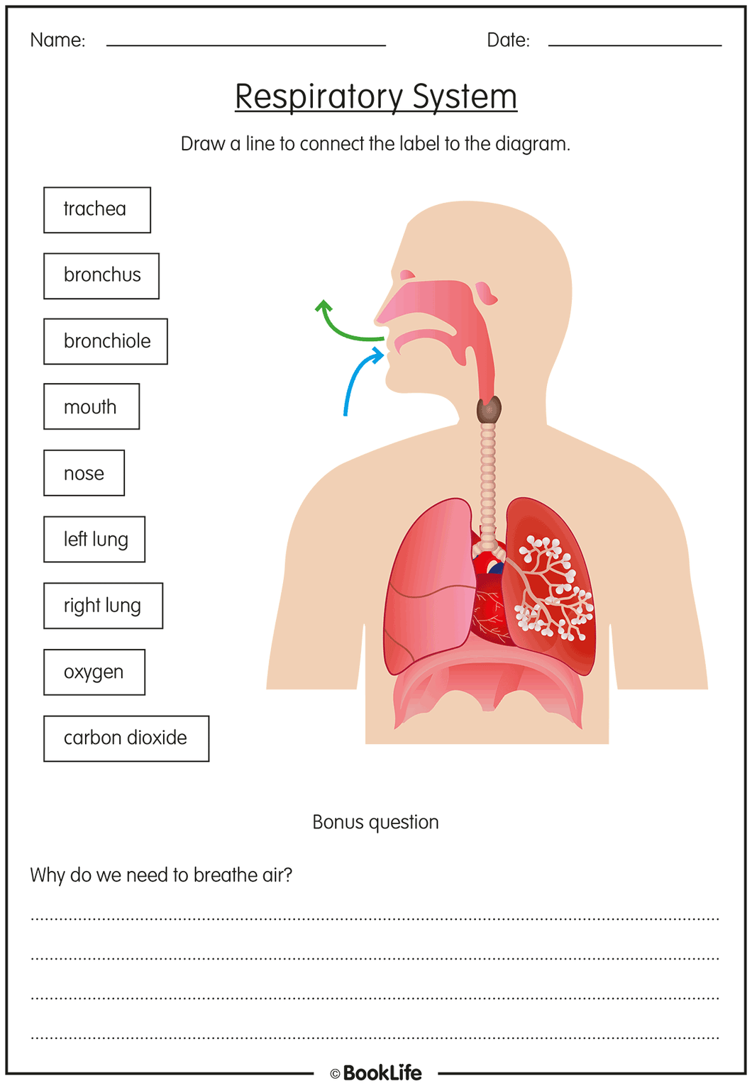 The Respiratory System by BookLife