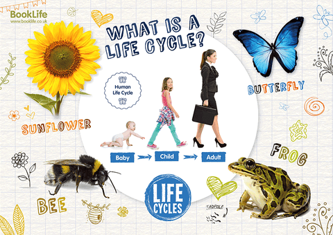 Free School Life Cycles Poster