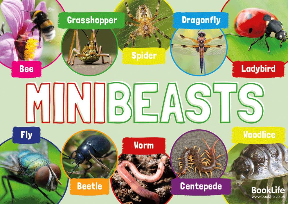 Minibeasts Poster by BookLife