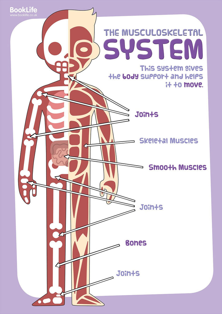 The Human Body Ks2 Booklife