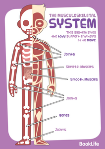 Free Human Body System Poster - Muscloskeletal by BookLife