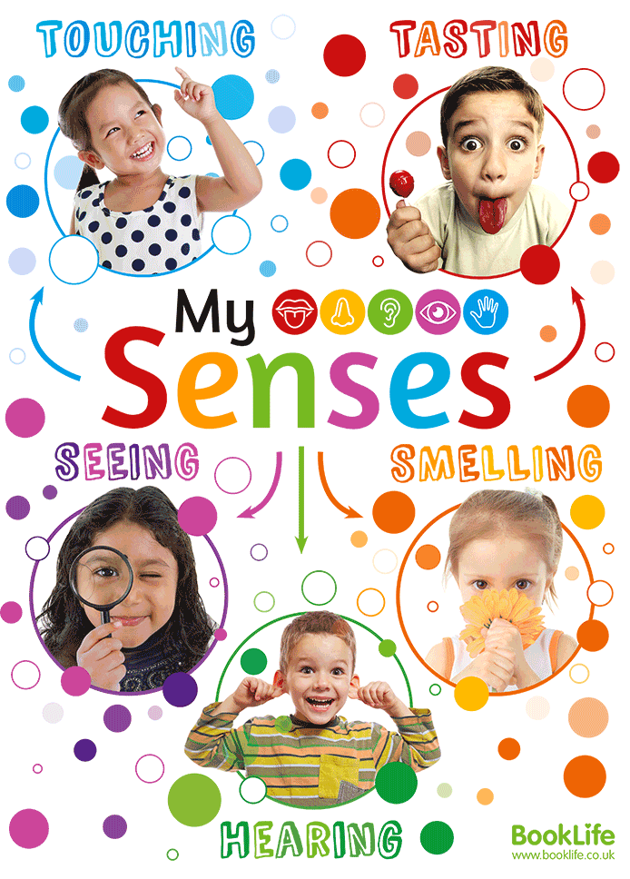 My Senses Poster by BookLife