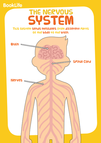 Free Human Body System Poster - Nervous System by BookLife