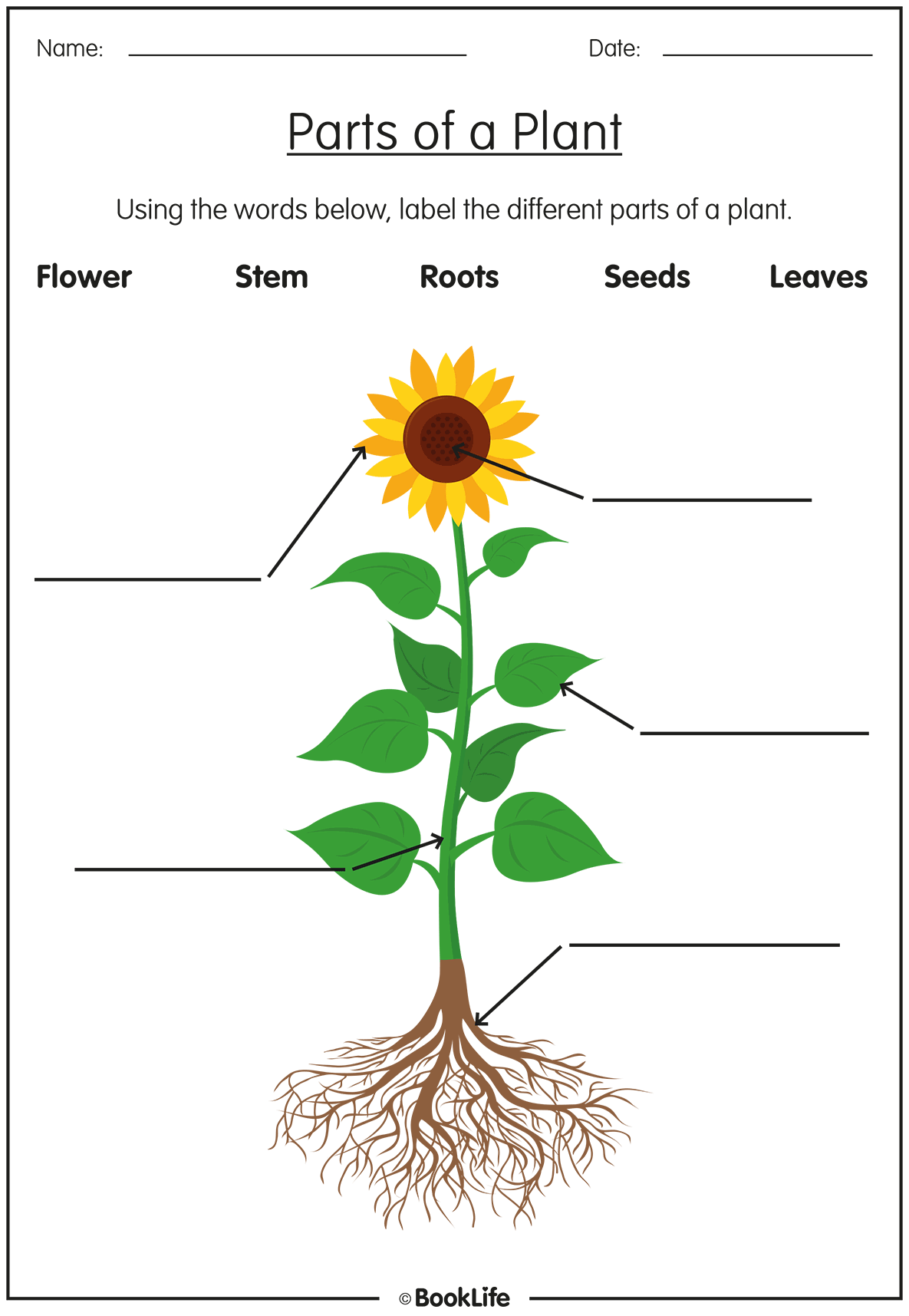 Free Parts Of A Plant Activity Sheet Booklife