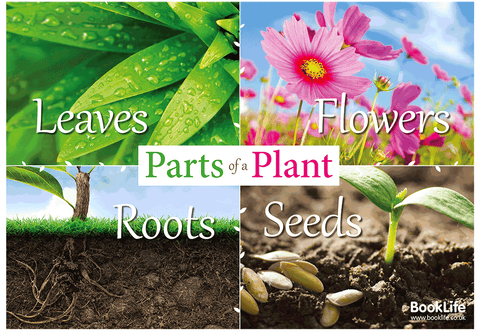 Parts of a Plant Poster