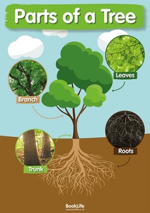 Parts of a Tree Poster by BookLife