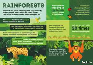 Free Rainforests Poster by BookLife