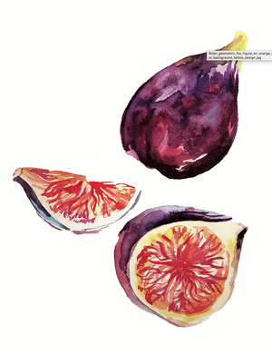 Fig fruit - Ideas2Earth