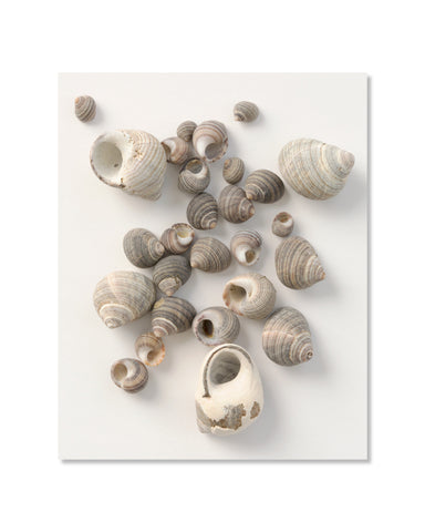 Littorines communes // Common Periwinkles 01 - 8x10