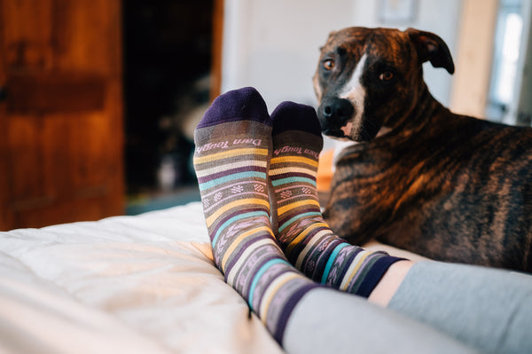 A dog curled up next to feet wearing darn tough socks