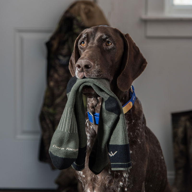 Image of a hunting dog, sitting near a front door holding  Hunter Over the Calf Heavyweight Hunting Socks in Forest in his mouth, Lifestyle Image