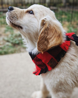 Plaid Bandana - Bandana - Wolfe Co. Apparel and Goods