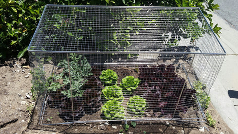Stainless Steel Wire Mesh Garden Bed - Shippable