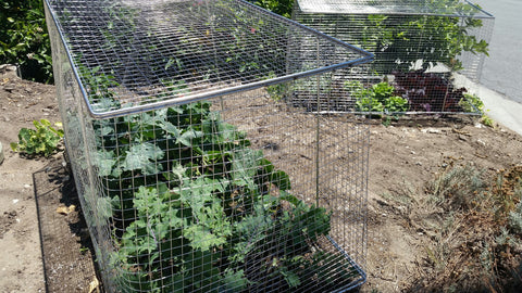 Stainless Steel Wire Mesh Garden Bed - Local Pick-Up Only