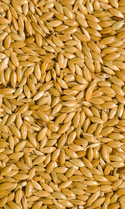 Canary seeds plain 3lbs