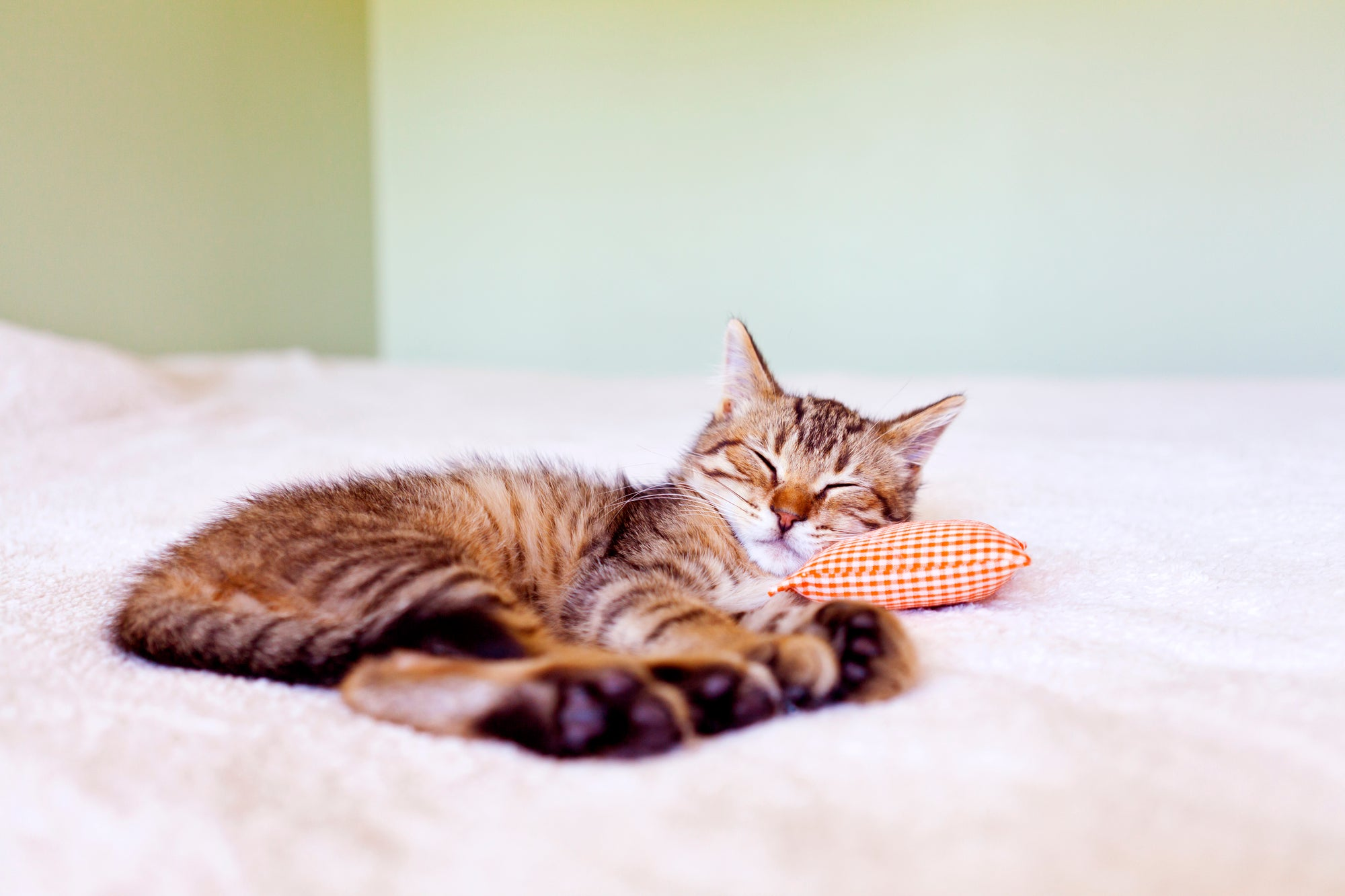 Is Your Cat Sad? Signs and Causes of Cat Depression