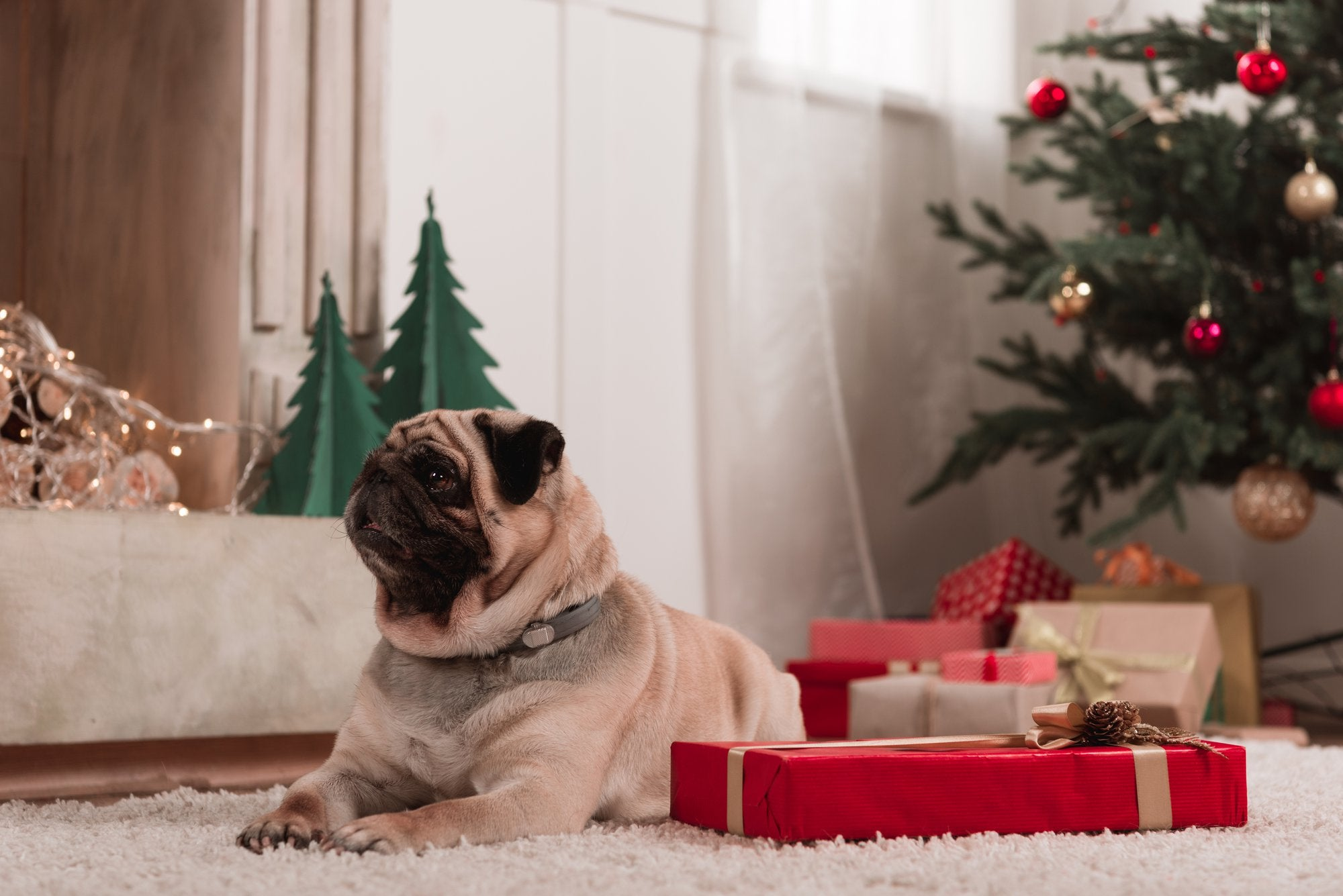 Your Dog's Christmas List