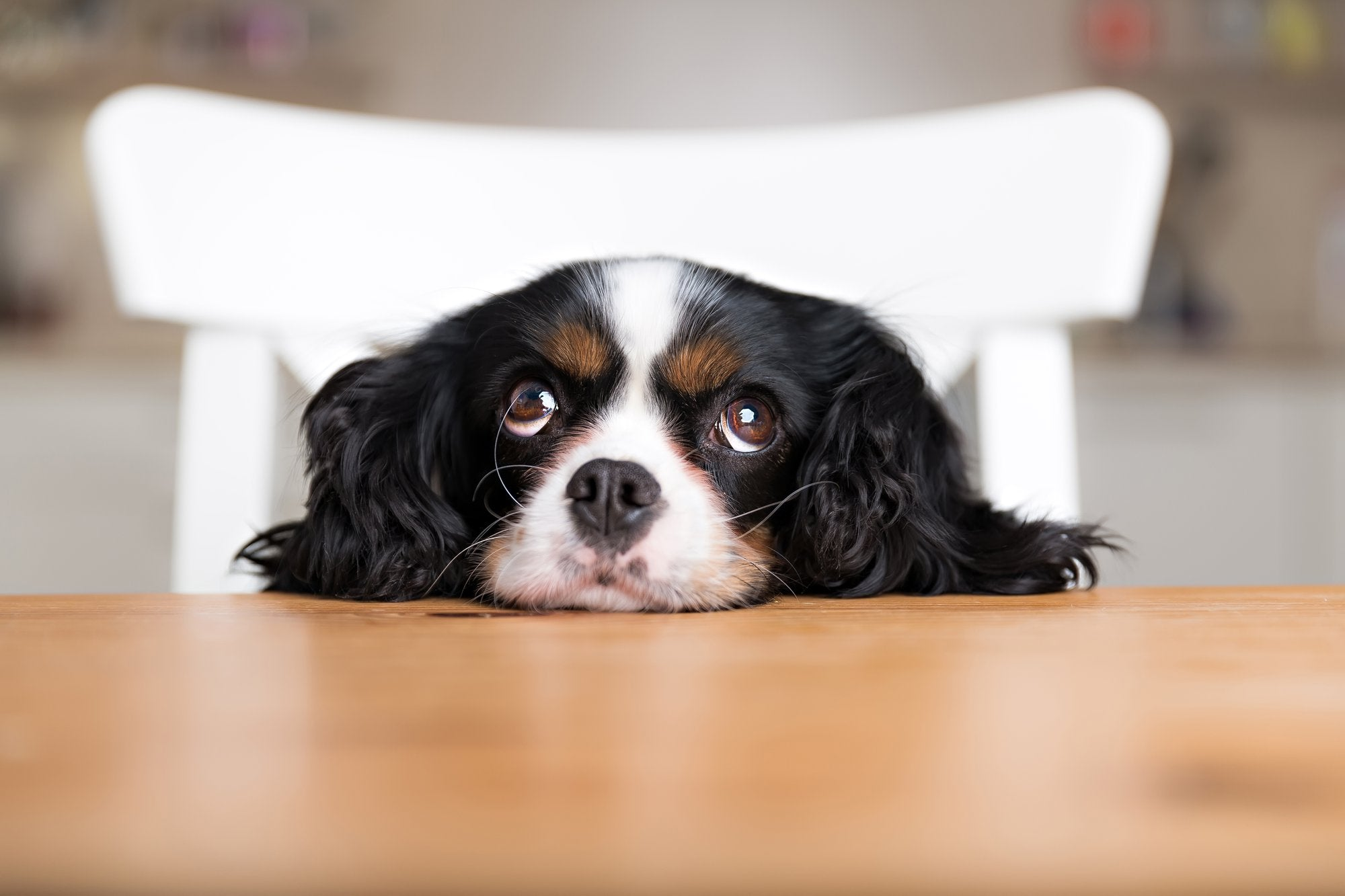 Dog Begging Prevention: Tips and Tricks