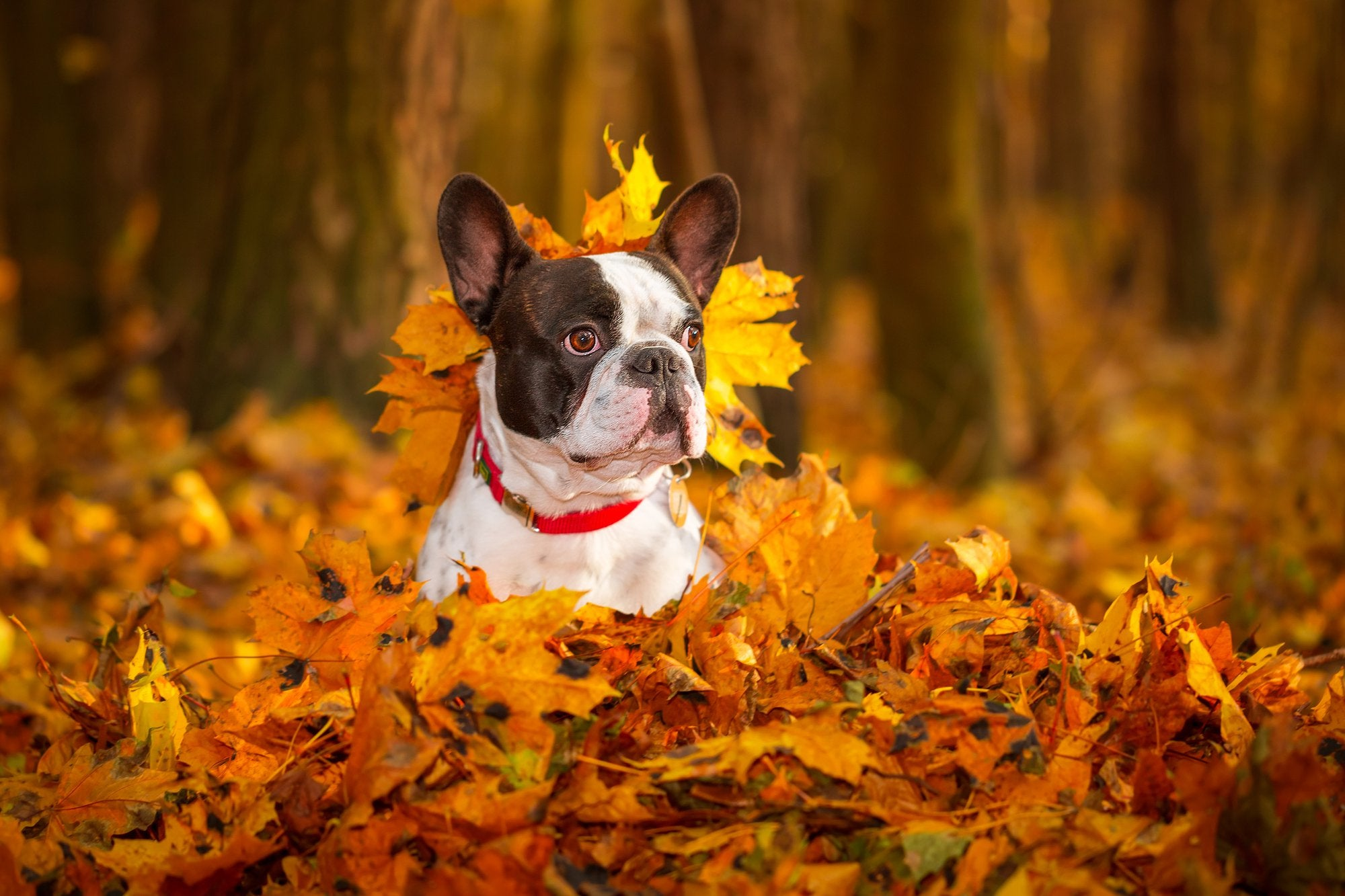 Fun Fall Activities to Stretch Your Pet's Legs