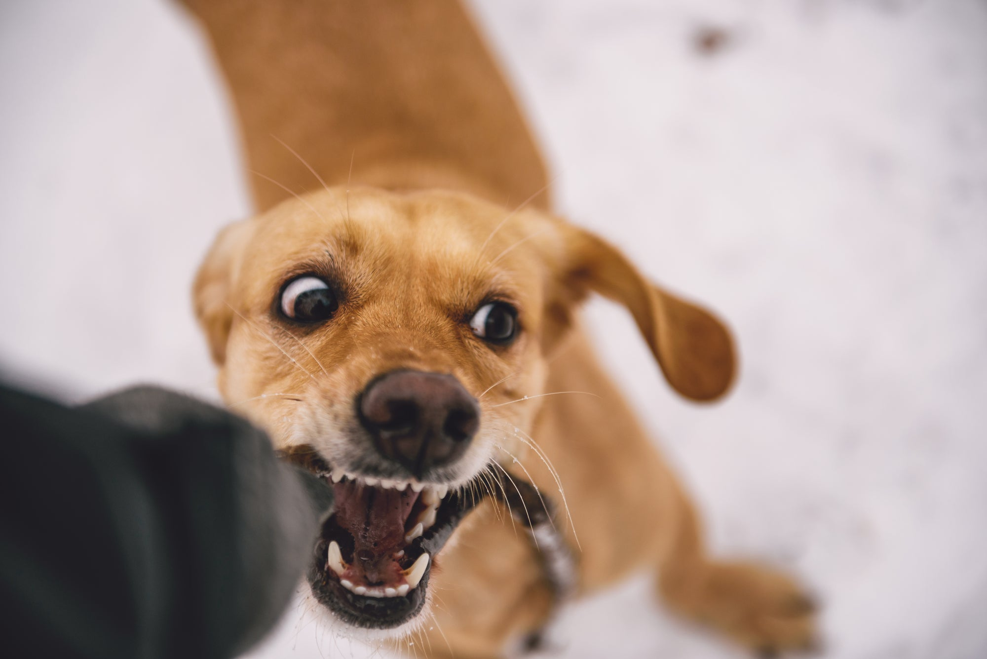 How to Get Your Puppy to Stop Play Biting