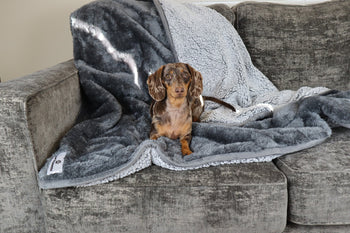The Many Uses of Pawtect™ Blankets