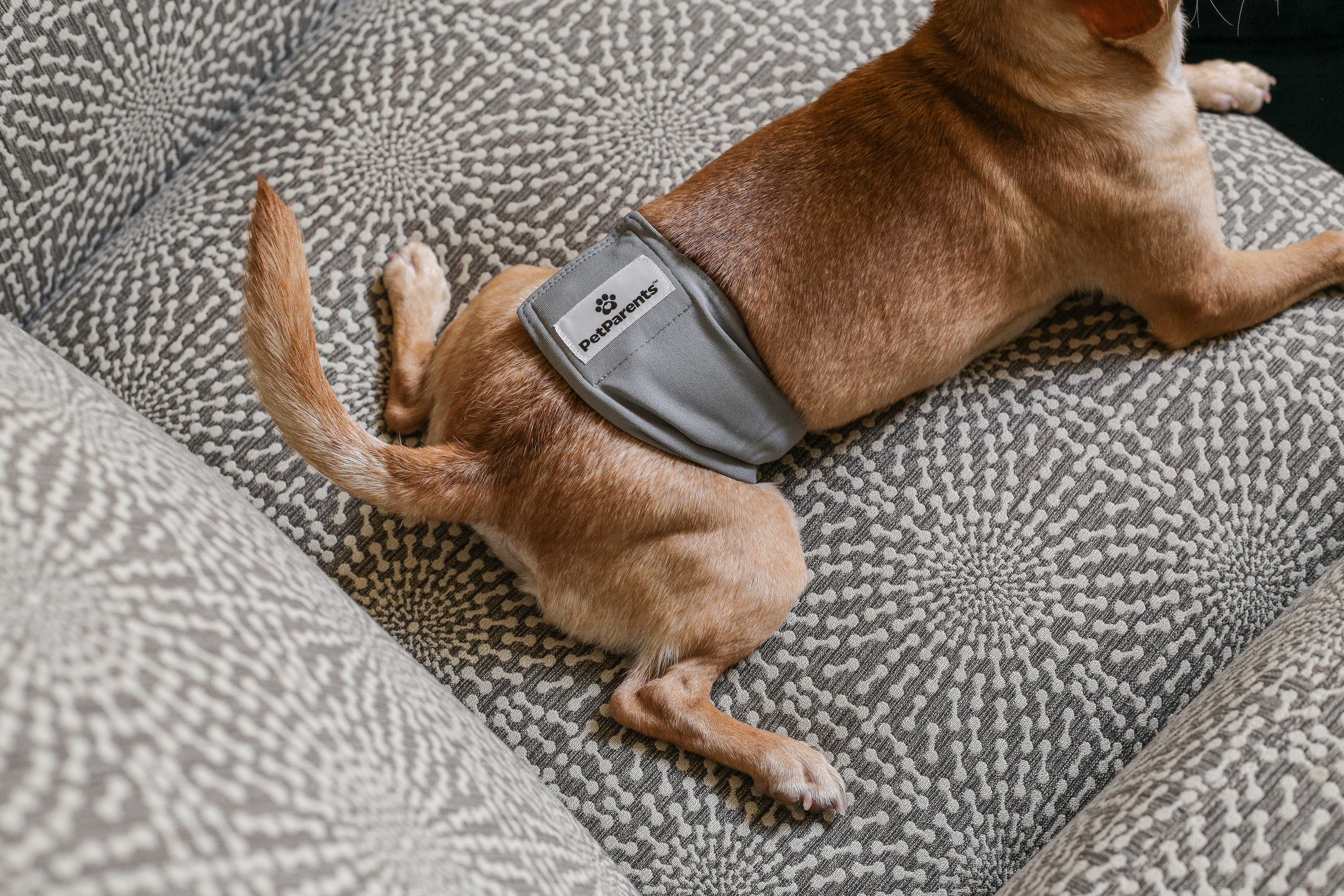 The Pet Parents® Guide to Dog Belly Bands