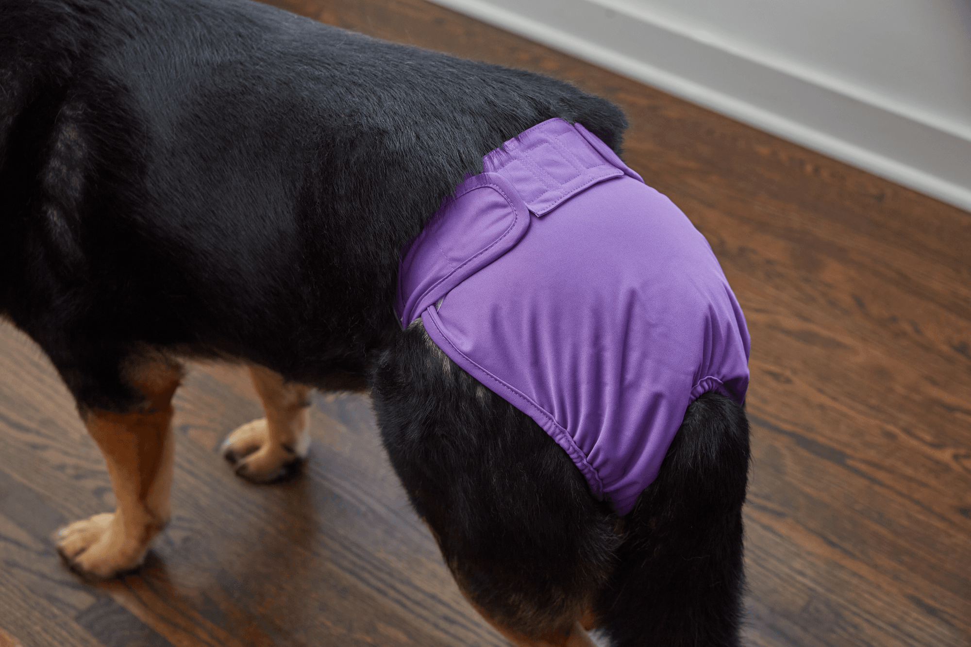 What Are Pet Parents® Washable Covrs™?